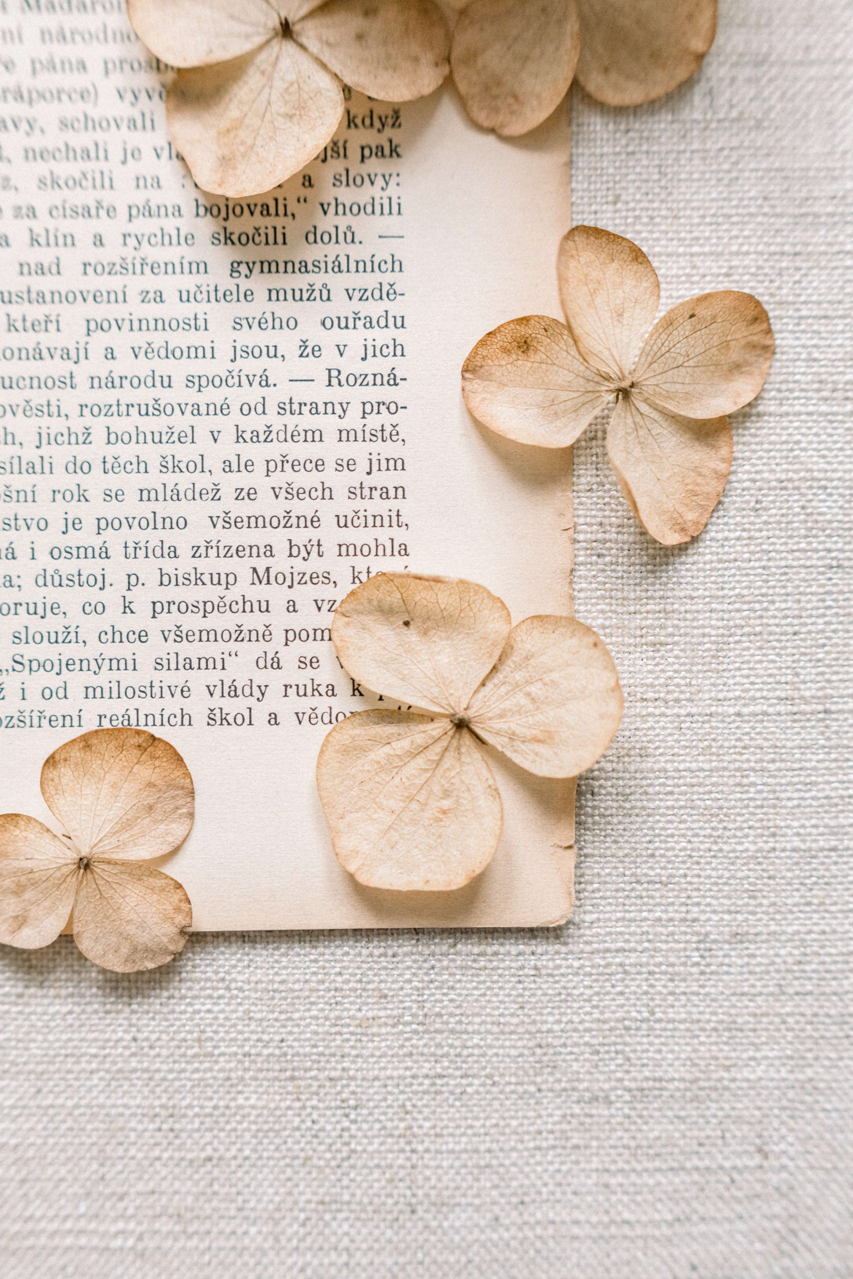 old page of antique book with dried hydrangea flowers, linen styling flatlay board. Photo by Cristina Ilao www.cristinailao.com