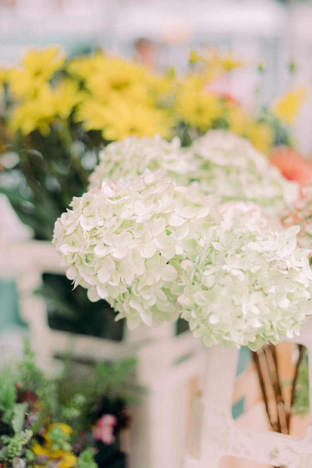 white hydrangea flowers at the Columbia Road flower Market - Photo by Cristina Ilao